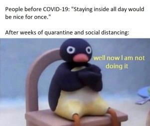 covid19-pingu-meme